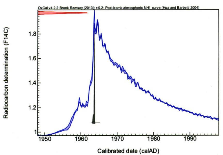 Post-bomb calibration curve (blue) and interval of calibrated dates (grey peak). Radiocarbon date: post 1954. Calibrated dates: 1963-1964 (95,4 % probability).