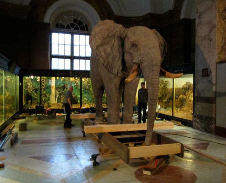 MRAC Elephant