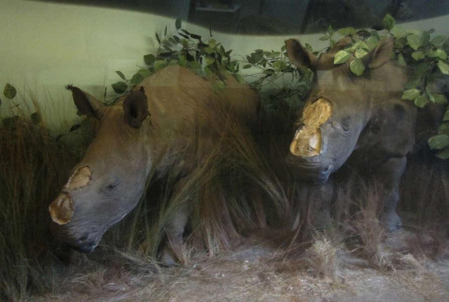 MRAC Rhino